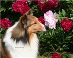 Sable Flower