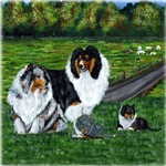 Shetland Sheepdog Blue and Tri Famliy
