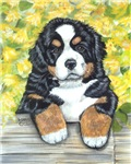Bernese Mountain Dog Fence Pup