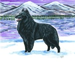 Belgian Sheepdog In Snow