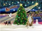 CHRISTMAS MAGIC<br>& Boxer