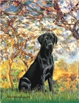 SPRING<br>with a Black Labrador Retriever
