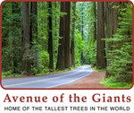 Avenue of the Giants Apparel