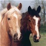 Horse Photo Coasters