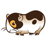 cute little guinea pig cavy