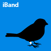 iBand (blue)
