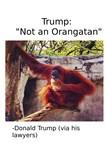 Trump Orangutan