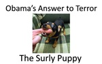 The Surly Puppy
