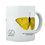 Baby Butterflies! (small mugs)