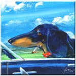 Driving Doxie
