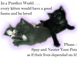 Spay Neuter Kittens