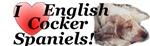 I love English Cocker Spaniels