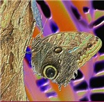 Owl Butterfly Psych
