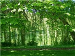 Looking Through Willows
