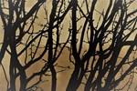 Caragana Branches