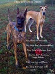 New Great Dane Products