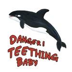 Orca Whale - Danger! Teething Baby