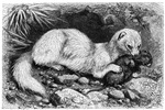 Brehm's Animal Life