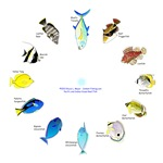 Pacific and Indian Ocean Reef Fish Clock 2