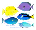 5 Unicornfish Surgeonfish Tang