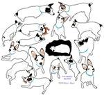 Many puppy poses
