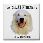 My Great Pyr is a Rescue...