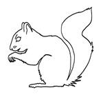Squirrel (Outline)