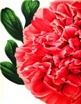 Large Red Peony Flower with Leaves