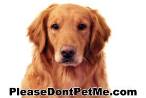 More Please Don't Pet Me!