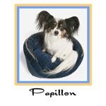 Papillon Puppy t shirt & tees