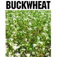 Buckwheat Store