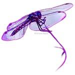 Elusive Dragonfly