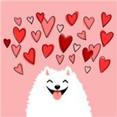 Pomeranian Valentine