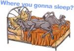 NC Blu Where you gonna sleep