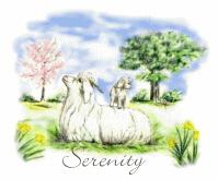 Goats- Angora Serenity
