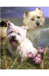 Bertie & Eddie