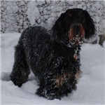 Puppy in a Snowstorm
