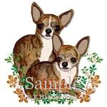 Chihuahua Brindle Smooths