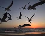 Gulf Breezes