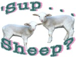 'Sup Sheep...