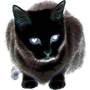 Black Cat Blue