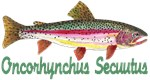 RAINBOW Trout, Ichthyology