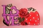 Valentine's Day #8