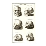 Antique Medical Skulls
