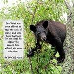 Sinful Bear - Hebrews 9:28