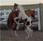 Fun Foals