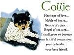 White Collie Puppy