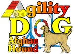HOUND GROUP AGILITY DOGS