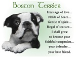 Boston Terrier Puppy Gifts