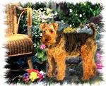 Welsh Terrier Poem